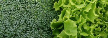 Folsyre i broccoli